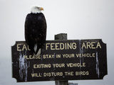 A Bald Eagle Sits on a Sign at the Eagle Feeding and Viewing Area Photographic Print
