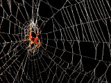 A Spider Rests Photographic Print