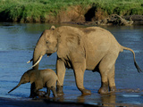 An Elephant and Her Calf Cross a River Photographic Print