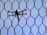 A Dragonfly Clings to the Wire of a Backstop During the Iowa High School Baseball Tournament Photographic Print