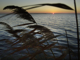 The Sunset is Seen Through Reeds on the Bay Side of Island Beach State Park Photographic Print