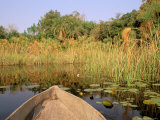 Mokoro through Reeds and Papyrus, Okavango Delta, Botswana Photographic Print by Pete Oxford