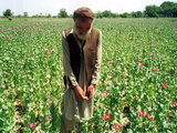 An Afghan Farmer Working Photographic Print