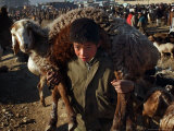 A Young Man, 14, Carries a Sheep on His Shoulders Photographic Print