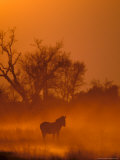 Burchell&#39;s Zebra at Sunset, Okavango Delta, Botswana Photographic Print by Pete Oxford