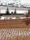 A Snow-Covered Vineyard is Seen During a Snowfall Photographic Print