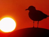 A Gull Perches on a Concrete Piling at Cleveland's North Coast Harbor Photographie