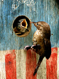 A Hungry Baby Wren Opens Wide for a Snack Wiggling Photographic Print