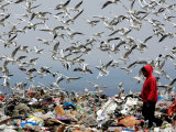 Birds Fly as a Girl Walks Through a Pile of Garbage on a City Dump on the Outskirts of Belgrade Photographic Print