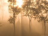 Mist in Tropical Rainforest, Thailand Photographic Print by Gavriel Jecan