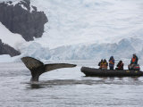 Visitors Get Close-up View of Humpback Whales in Cierva Cove, Gerlache Strait, Antarctic Peninsula Photographic Print by Hugh Rose