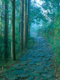 Kumano Road, Nakanohechi, Wakayama, Japan Photographic Print by Rob Tilley