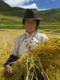 Tibetan Farmer Harvesting Barley, East Himalayas, Tibet, China Photographic Print by Keren Su