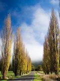 Autumn Colour and Wanganui, Raetihi Road, near Wanganui, North Island, New Zealand Photographic Print by David Wall