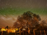 Star Trails Over Walnut Tree, Domain Road Vineyard, Central Otago, South Island, New Zealand Photographic Print by David Wall