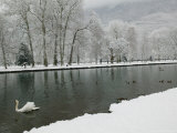 Chateau de Vizille Park, Swan Lake, Vizille, Isere, French Alps, France Photographic Print by Walter Bibikow