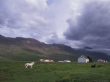 Horse Farm with Mountains in Background, Vatnasdalsholar Hills, North West Islands, Iceland Photographic Print by Bill Bachmann