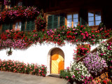 Flowers and Chalet in the Resort Area, Gstaad, Switzerland Stampa fotografica di Bill Bachmann