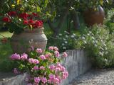 Garden Detail, San Domenico Palace Hotel, Taormina, Sicily, Italy Photographic Print by Walter Bibikow