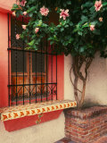 Flowering Hibiscus Near Pink Window, Puerto Vallarta, Mexico Photographic Print by Tom Haseltine