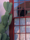 Cactus and Window, Barrio District, Tucson, Arizona, USA Photographic Print by Joanne Wells