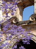 Purple Spring Flowers in Bloom, La Compania de Jesus, Antigua, Guatemala Photographic Print by Cindy Miller Hopkins