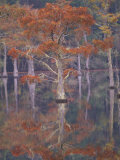 Cypress Tree Reflections, George Smith State Park, Georgia, USA Photographic Print by Joanne Wells