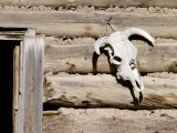 Cattle Skull on Cabin near Salmon, Idaho, USA Photographic Print by Chuck Haney