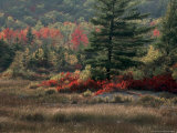 Blueberry Bushes and Marsh, Acadia National Park, Maine, USA Photographic Print by Joanne Wells