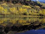 Fall Reflections in Pond, Telluride, Colorado, USA Photographic Print by Cindy Miller Hopkins