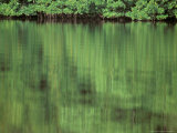 Connie Bransilver - Mangrove, 10,000 Islands, Everglades, Florida, USA Fotografická reprodukce