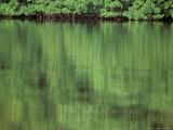 Connie Bransilver - Mangrove, 10,000 Islands, Everglades, Florida, USA Fotografická reprodukce
