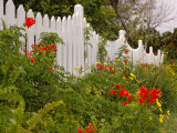 Border Garden, New Smyrna Beach, Florida Photographic Print by Lisa S. Engelbrecht