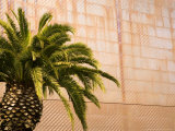 Opening Day, New deYoung Museum, San Francisco, California, USA Photographic Print by Michele Westmorland