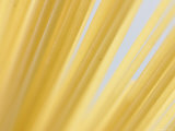 Close-up of Uncooked Pasta Spaghetti Noodles Fotografisk tryk