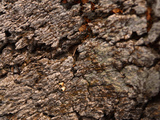 Close-up of Rough Gray and Brown Tree Bark Photographic Print