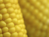 Close-up of Fresh Yellow Corn on the Cob Photographic Print