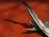 Close-up of Gray Feathers Lying on a Red Wooden Floor Photographic Print