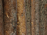 Close-up of Dark Brown Rough Tree Bark Photographic Print