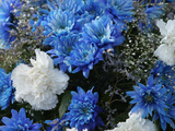 Close-up of Colorful Blue and White Flowers with Baby's Breath Photographic Print