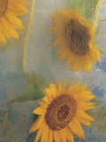 Sunflowers Behind Wet Glass with Water Droplets Photographic Print
