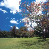 Flowering Trees with Blue Sky and White Clouds Photographic Print