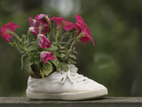 A White Shoe Used as a Flower Pot with Pink Blossoms Photographic Print