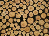 Close-up of Many Cut Logs in a Pile Photographic Print