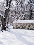 Wall and Snow Covered Trees Photographic Print