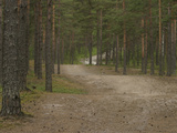 A Dirt Path Through Peaceful Pine Tree Woods Photographic Print