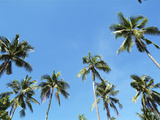Palm Trees and Blue Sky Photographic Print