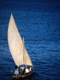 Traditional Dhow Leaving Port, Lamu, Coast, Kenya Photographic Print by Ariadne Van Zandbergen