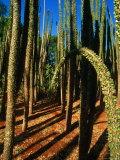 Spiny Forest in the Berenty Reserve, Berenty,Toliara, Madagascar Photographic Print by Carol Polich