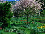 Blossom Tree at Monet's Garden Giverny, Haute-Normandy, France Photographic Print by John Hay